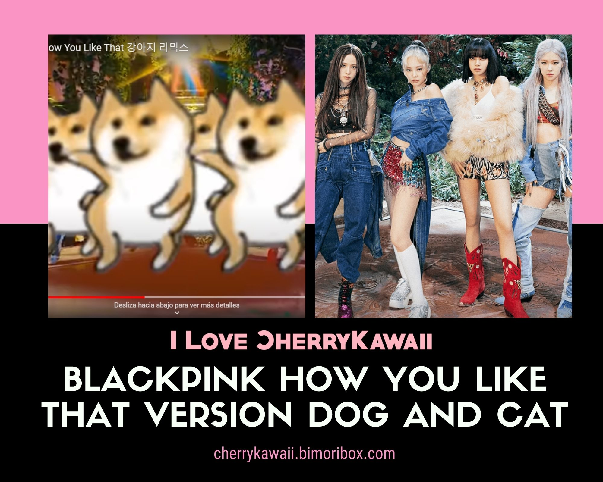 BLACKPINK HOW YOU LIKE THAT VERSION DOG AND CAT