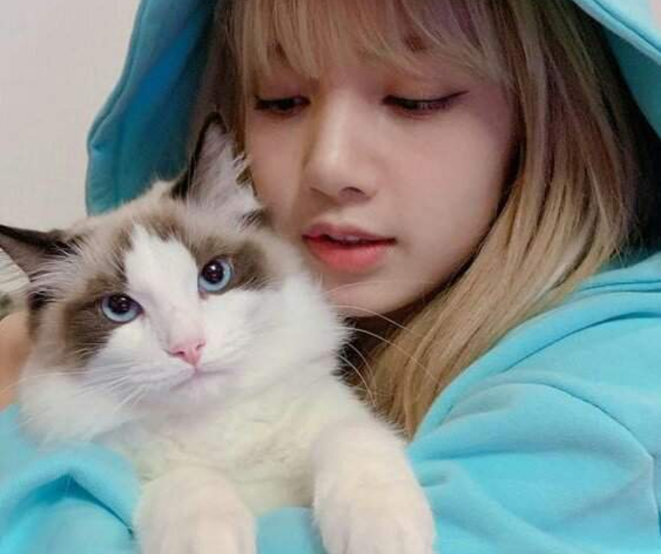 Lisa de Blackpink gato